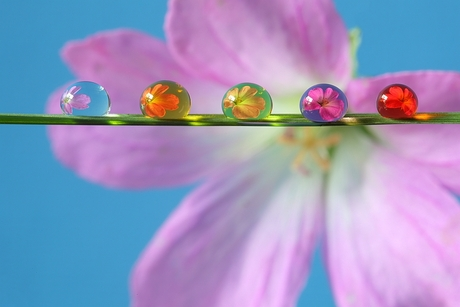 "Bloemendruppels ""Colourful Drops"""