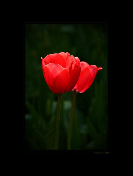 Flower Power VII
