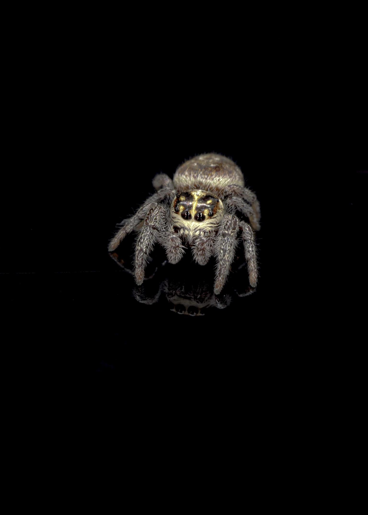 Along came a spider - Oefenen met de macro lens - foto door Ber1978 op 14-04-2021 - deze foto bevat: canon, canoneosm50, spider, macro, canonefm28mm, bek, grijs, uil, primaat, terrestrische dieren, kunst, snuit, roofvogel, vleugel, staart