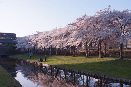 Even voorjaar - Bloesem - foto door Anneke1955 op 10-04-2021 - deze foto bevat: bloem, fabriek, water, lucht, plantkunde, natuur, boom, natuurlijk landschap, gras, ochtend