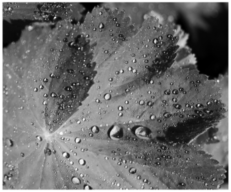 transparant zwart/wit 1