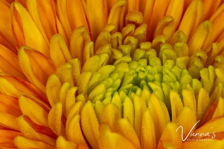 Yellow flower! - Ieder jaar krijg ik met mijn verjaardag een prachtige bosbloemen vanuit mijn werkgever. Dit is altijd een mooi moment om de macro lens uit de kast te - foto door Vienna op 10-04-2021 - locatie: Krimpen aan den IJssel, Nederland - deze foto bevat: macro, macro photography, bloemen, yellow, geel, flower, bloem, bloemblaadje, detailopname, bloeiende plant, macrofotografie, eenjarige plant, snij bloemen, perzik, stuifmeel, evenement