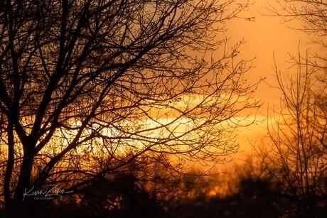 Silhouet Bij Zonsondergang