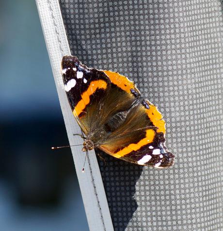 🦋 vlinder