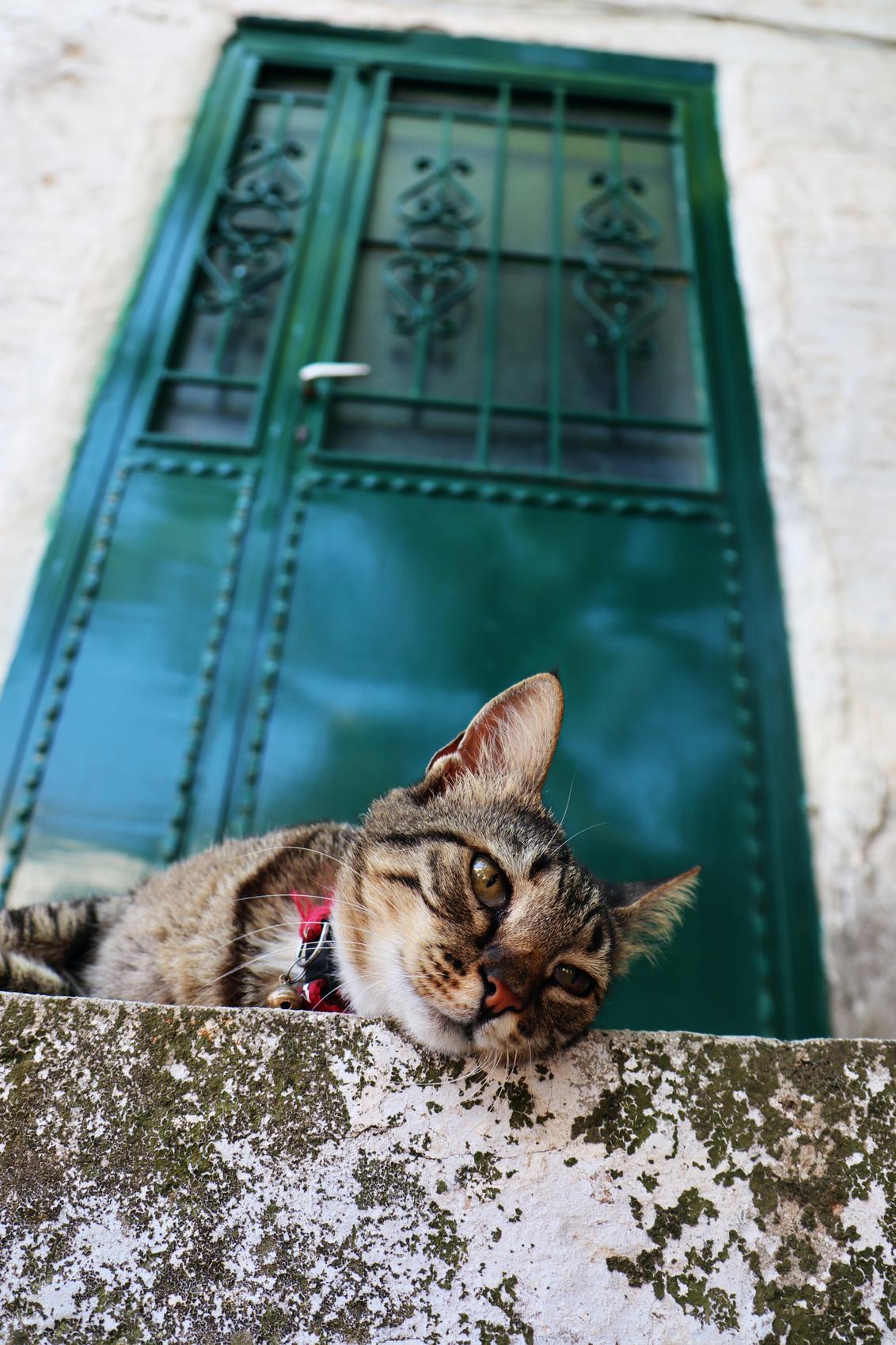 Relaxte huisbewaker - Ik hou van al die prachtige Griekse deuren. Deze kat ging er perfect voor liggen. - foto door Mijke1993 op 12-08-2019 - deze foto bevat: kleur, poes, kat, perspectief, deur, griekenland, grieks
