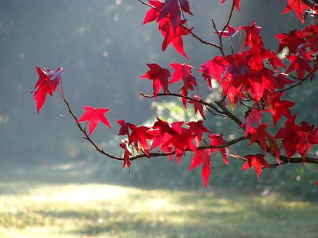 mooie roden bladeren
