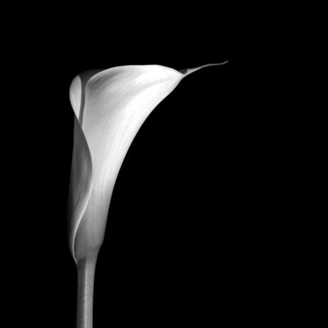 bloem12.jpg