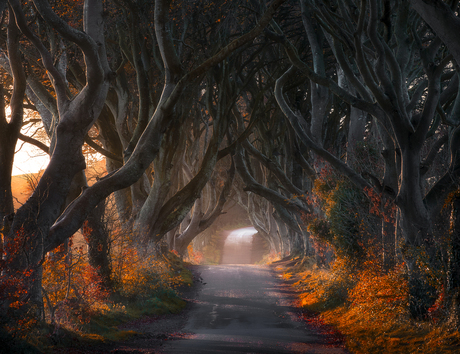 The road of the King