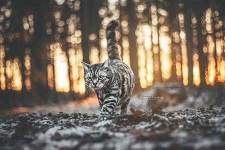 snow cat - genieten van de sneeuw. - foto door happycreatures op 26-01-2021 - deze foto bevat: kitten, natuur, poes, sneeuw, dieren, huisdier, kat, dierenfotograaf, kattenfotograaf