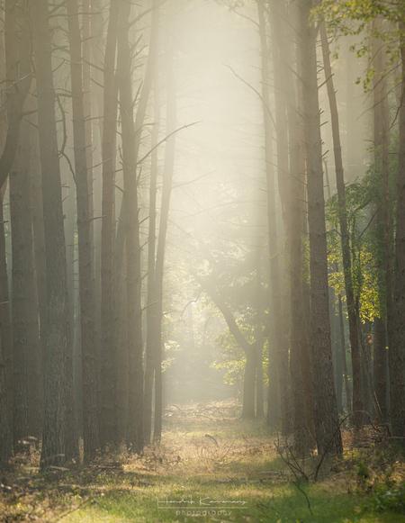 Mistige ochtend in het bos - - - foto door Hendrik1986 op 05-07-2020 - deze foto bevat: wolken, zon, bos, tegenlicht, zonsopkomst, bomen