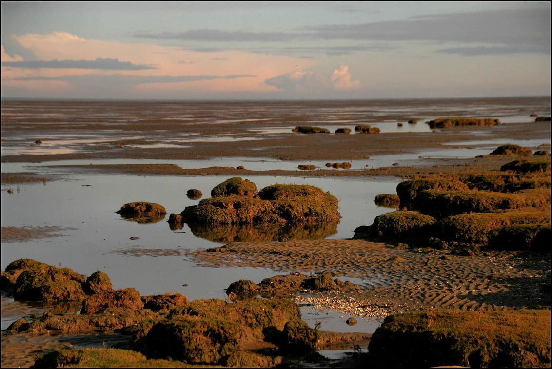 Kwelder landschap - Kwelderlandschap aan de waddenkust vlak bij de Eemshaven afgelopen maandag - foto door Teunis Haveman op 28-01-2021 - deze foto bevat: zee, natuur, landschap, kust, waddenkust
