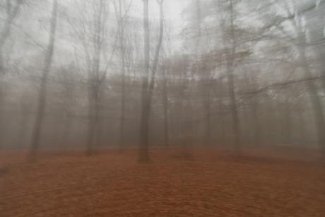witte wiefe in het bos