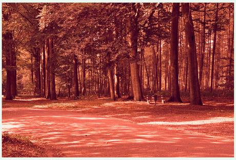 Rustplaats in het bos