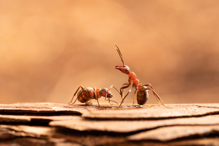 What's up - Als ik in mijn geliefde bos ben dan wil ik meestal wel even langs de mieren. Op een gegeven moment herkennen ze je denk ik. Deze keek ineens zo omho - foto door denmen op 26-10-2020 - deze foto bevat: macro, mier, Rode Bosmier