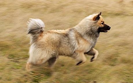 Run Delphi Run