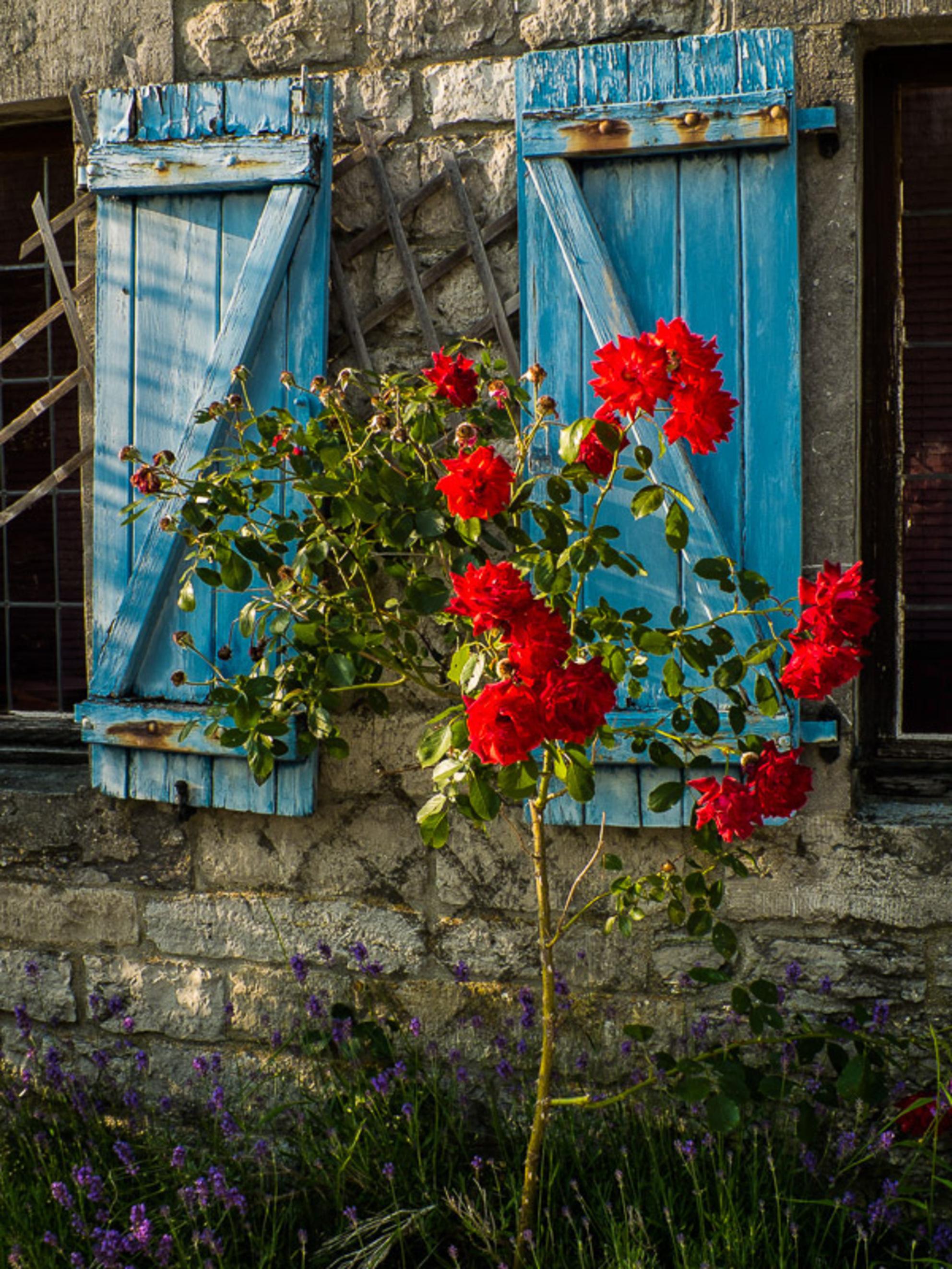 blauwe luiken.jpg - blauwe luiken. - foto door pnueindelijkook op 05-07-2014 - deze foto bevat: bloem, natuur, tuin, voorjaar - Deze foto mag gebruikt worden in een Zoom.nl publicatie
