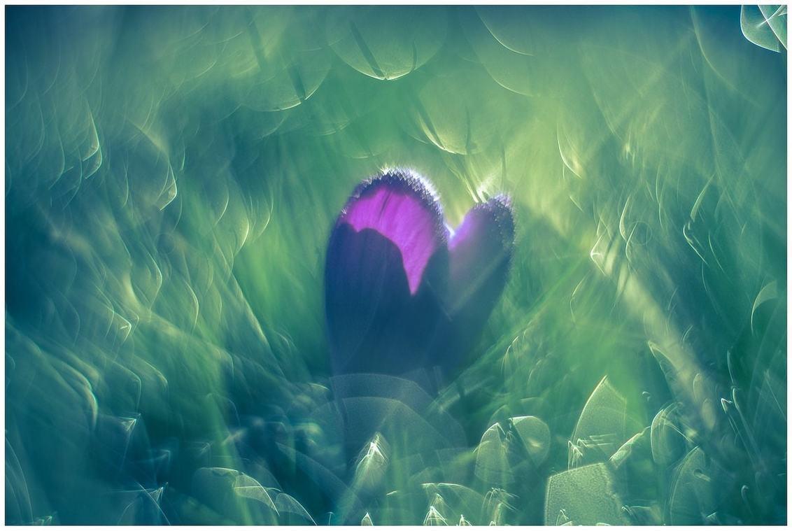 Krokus - - - foto door fred-stevenson op 02-03-2021 - deze foto bevat: bloem, krokus, bokeh, helios, vintage lens