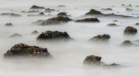 Schelpen in zee