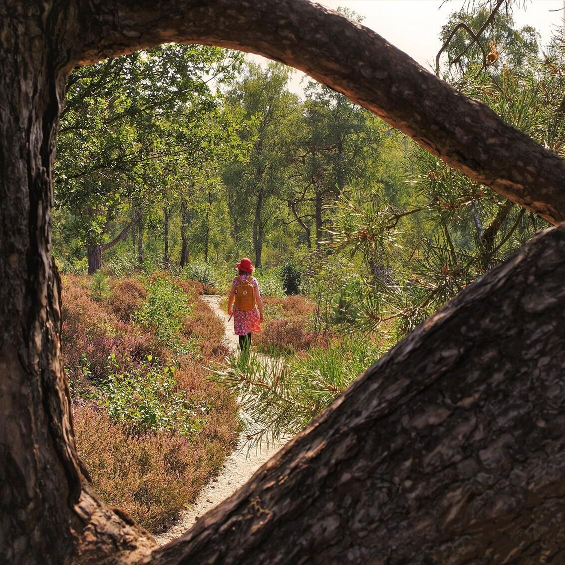 Framed - Wandelen op de Sallandse Heuvelrug op een prachtige nazomerse dag. - foto door hanshoeben51 op 16-09-2020