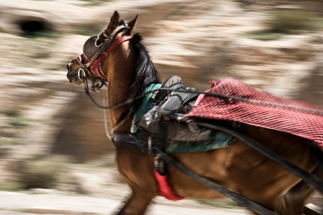 het rennende paardje in Petra Jordanié