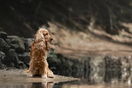 Fellow bij het water