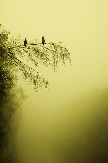 Vogels in mist