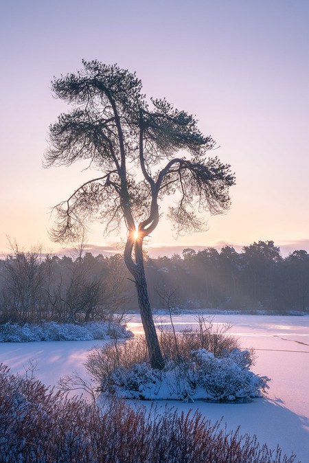 New Dawn, New (Snowy) Day - De zon die heerlijk tussen de takken van deze boom opkomt, op een winterse ochtend in Februari van 2021. De sneeuw en de winterse week die we nog lan - foto door RobinGooijersFotografie op 25-02-2021 - deze foto bevat: wolken, paars, blauw, zon, boom, water, natuur, licht, sneeuw, winter, ijs, landschap, mist, bos, tegenlicht, zonsopkomst, bomen, zonlicht, hdr, zonneschijn