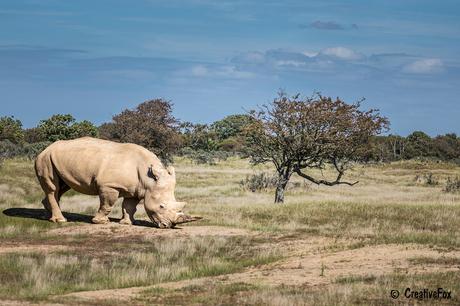 AWD Rhino