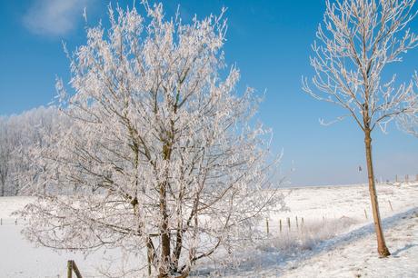 TPF_0337-winter2012