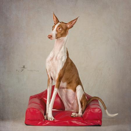 Elegantie - - - foto door nuelle op 27-08-2015 - deze foto bevat: hond