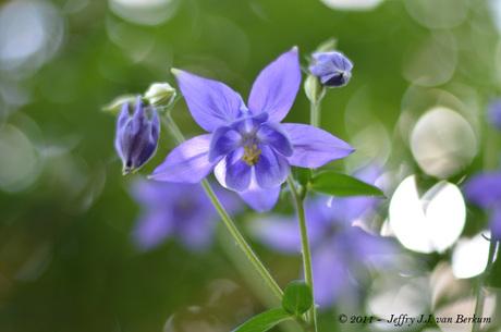 Blauw bloempje