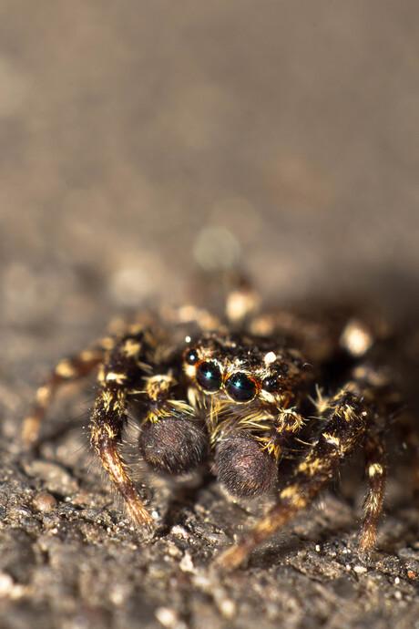 Lief klein spinnetje