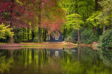 Frisgroene lentekleuren met reflectie in het bos.