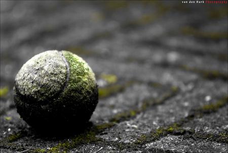 Survival - Waarom 'Survival'? Omdat deze tennisbal al maanden in de tuin ligt en er nu mos op groeid. Dit laat mij zien dat de natuur sterker is dan wat de men - foto door Vinnyme op 10-07-2008 - deze foto bevat: gras, natuur, tuin, mos, bal, tennis, survival, green, tennisbal, vinnyme