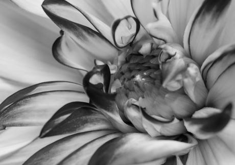 Colourless Flower