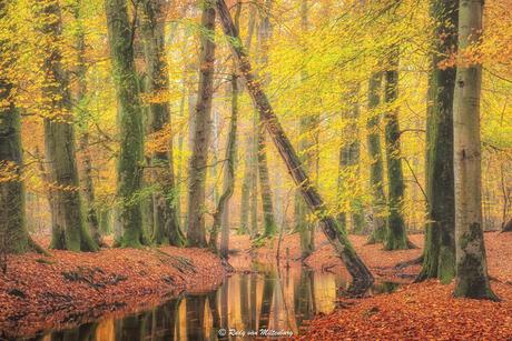 Autumn at its peak