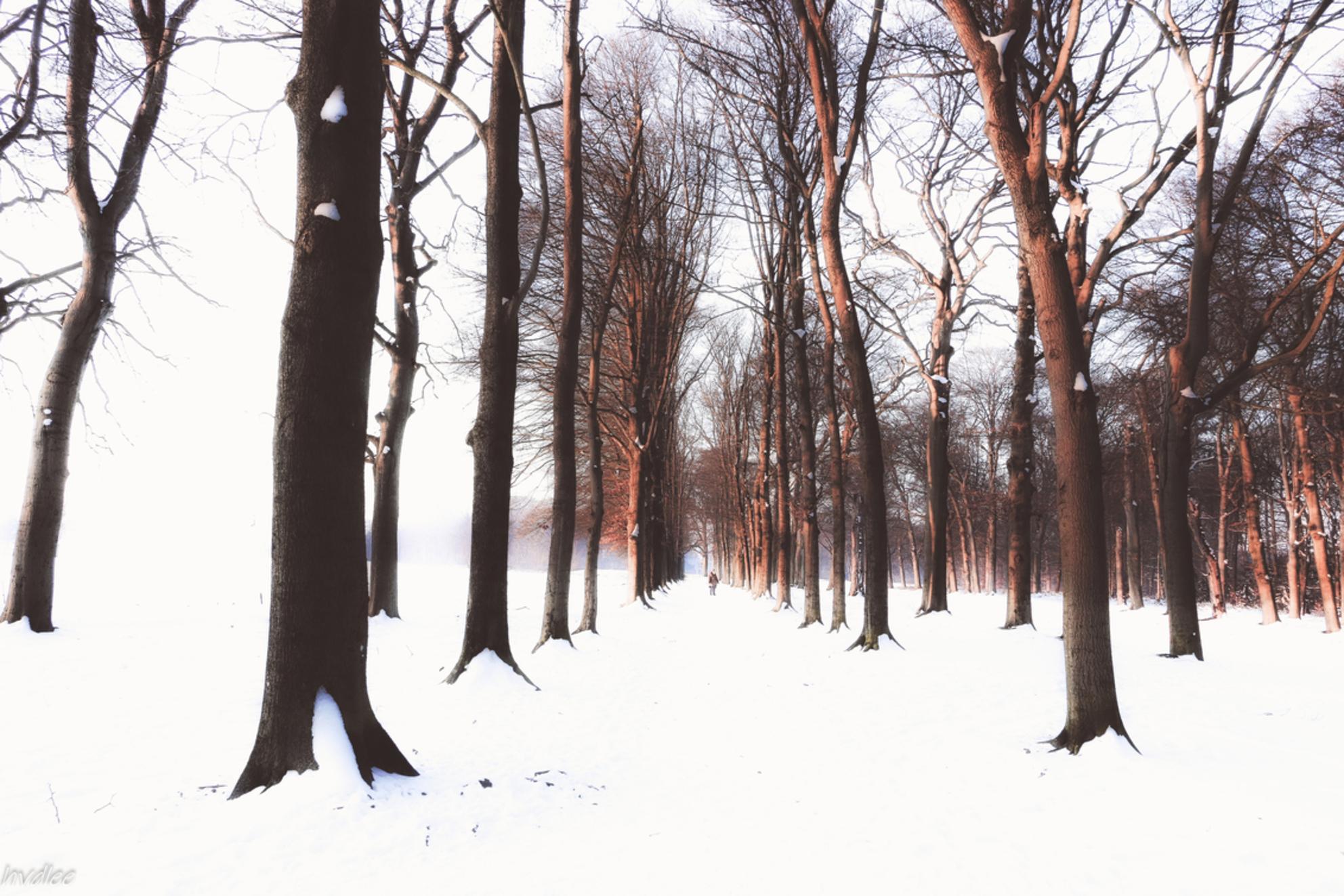 Beuken in de winter - Beuken in Leersum (worden waarschijnlijk in 2021 gekapt, 650 stuks!) Bedankt voor de aardige reacties op eerdere foto's. - foto door hilda1 op 12-02-2021 - deze foto bevat: natuur, winter, landschap, bomen, beuken - Deze foto mag gebruikt worden in een Zoom.nl publicatie