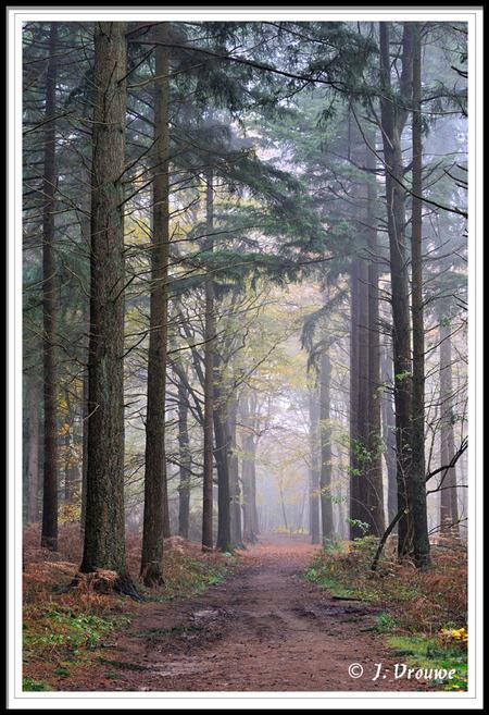 dennenpad - stemmig bos bij Lage Vuursche - foto door janv2 op 07-12-2013 - deze foto bevat: bospad, mist, beukenbomen, den, dennen, beuken, dennenbos