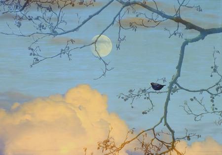 Het lied van de Merel - Nóg heb ik hem niet gehoord, maar dat zal niet lang meer duren. - foto door fujializah op 13-02-2014 - deze foto bevat: merel, bewerkt, maan, avondlucht