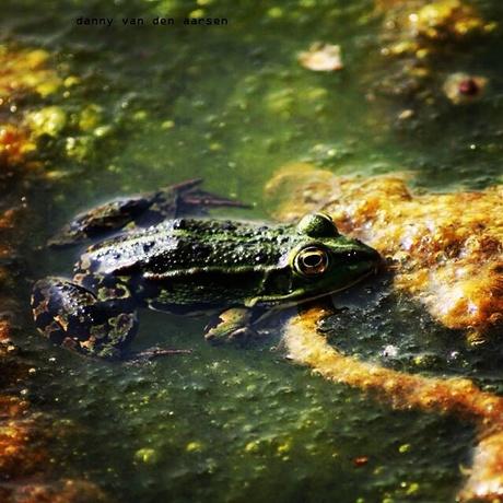 kikker in moeras