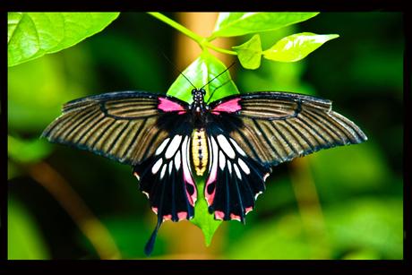 Vlinder?