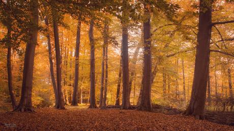 Herfst in het Bonninkbos