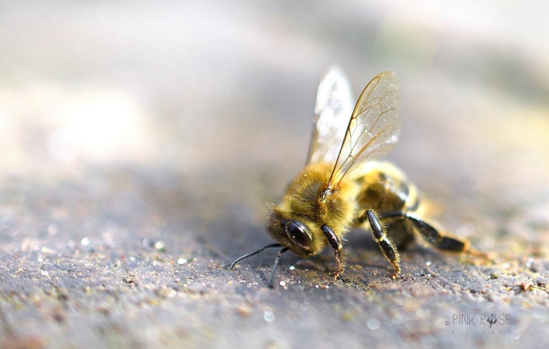 Lens kwijt... - Lens kwijt :-)  Of verzin er zelf een verhaaltje bij... - foto door PinkRosePictures op 31-03-2021 - deze foto bevat: macro, natuur, bij, insect, dof