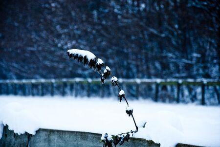 Winter 2010 (2) - Winter 2010 - foto door robbertverwaart op 24-12-2010 - deze foto bevat: wolken, sneeuw, winter, ijs, 60, koud, nikon, d, nederland, kou, dordrecht, 18, nikkor, 105, 2010