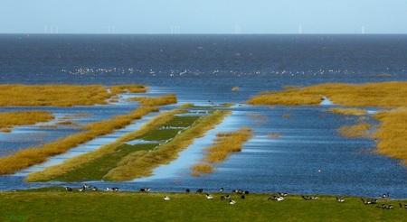 Hoogwater op de kwelder  - Dit is de kwelder bij Noordpolderzijl te Usquert,  Groningen.  - foto door Vissernpz op 11-04-2021 - locatie: 9988 TE Noordpolderzijl, Nederland - deze foto bevat: waddenzee, zee, natuur, wad, noordpolderzijl, kwelder, vogelrijke, water, lucht, ecoregio, natuur, azuur, natuurlijke omgeving, natuurlijk landschap, meer, lichaam van water, kust- en oceanische landvormen