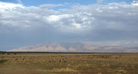 _serengeti