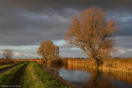 Herfstkleuren Westerwijtwerdermaar bij Ten Boer, Groningen