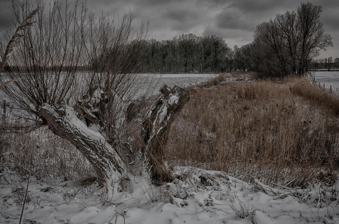 Still going strong - Oude wilg in winters kleed. Na iedere knotbeurt ontspruit er weer nieuw leven aan. Veel Hollandser kan het niet, zo'n boom   in de polder, bij wate - foto door PeterKosterHT op 07-02-2021 - deze foto bevat: lucht, panorama, natuur, winter, ijs, landschap, bos, bomen, rivier, polder, hdr