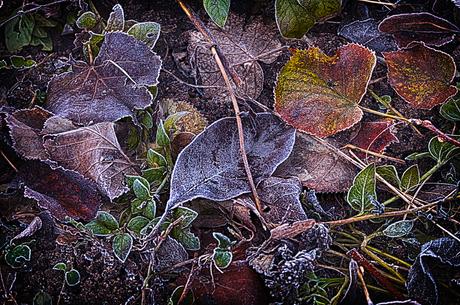 bladeren vorst