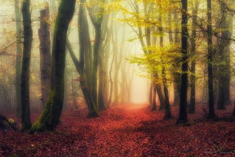Dansende bomen lang een bospad